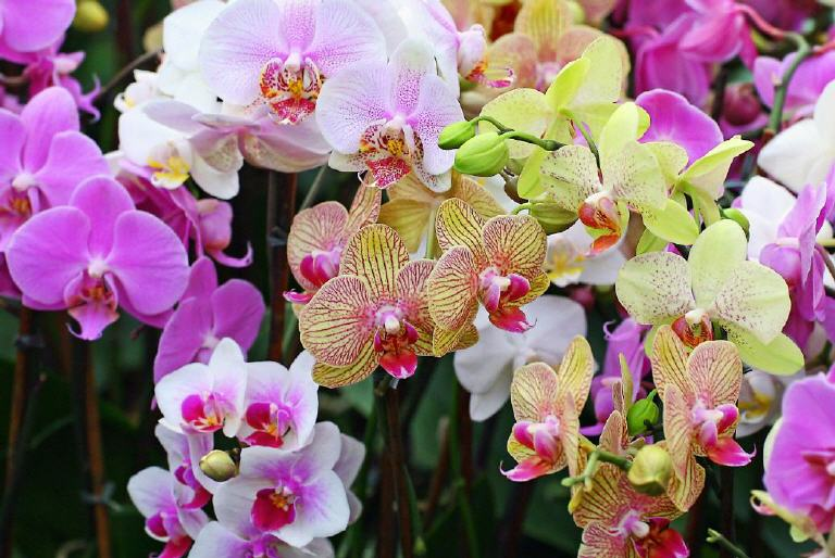 How To Look After Orchids At Home