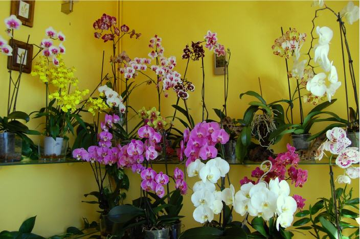 how to look after orchids after flowering
