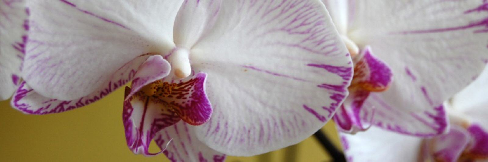 Orchids how to look after them-3395